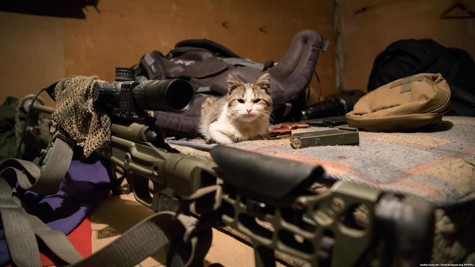 Дозволений для фотографування «.308» і все той же кіт на ім'я «Кіт»