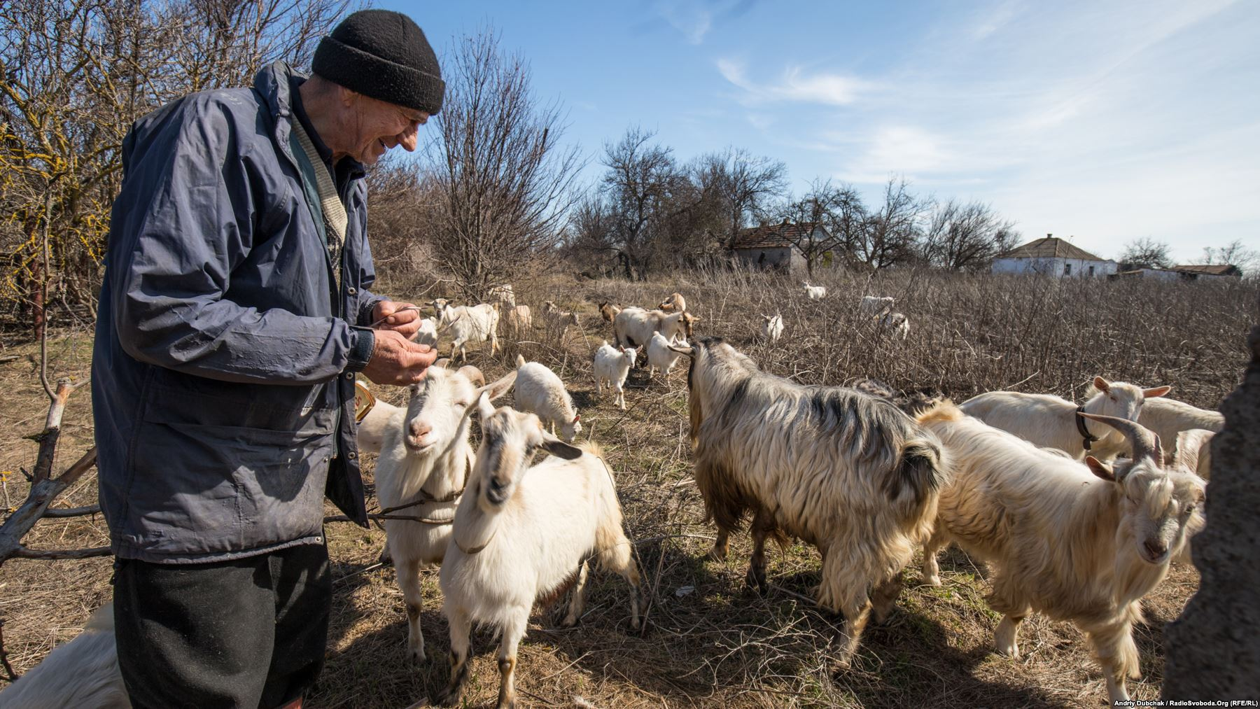 "Mykola Ivanovych is one of 10 locals who opted to stay in the now militarized village. The 71-year-old looks after his 30 goats and sells milk mostly to Ukrainian soldiers. Photographer Dubchak says the goats remain highly sensitive to the fighting. ""As soon as they hear shooting they run in the opposite direction."" The flock has also been known to influence the fighting by clustering around concealed Ukrainian sniper positions, braying for food. ""As a result the sniper has to change his firing position"" Dubchak says."