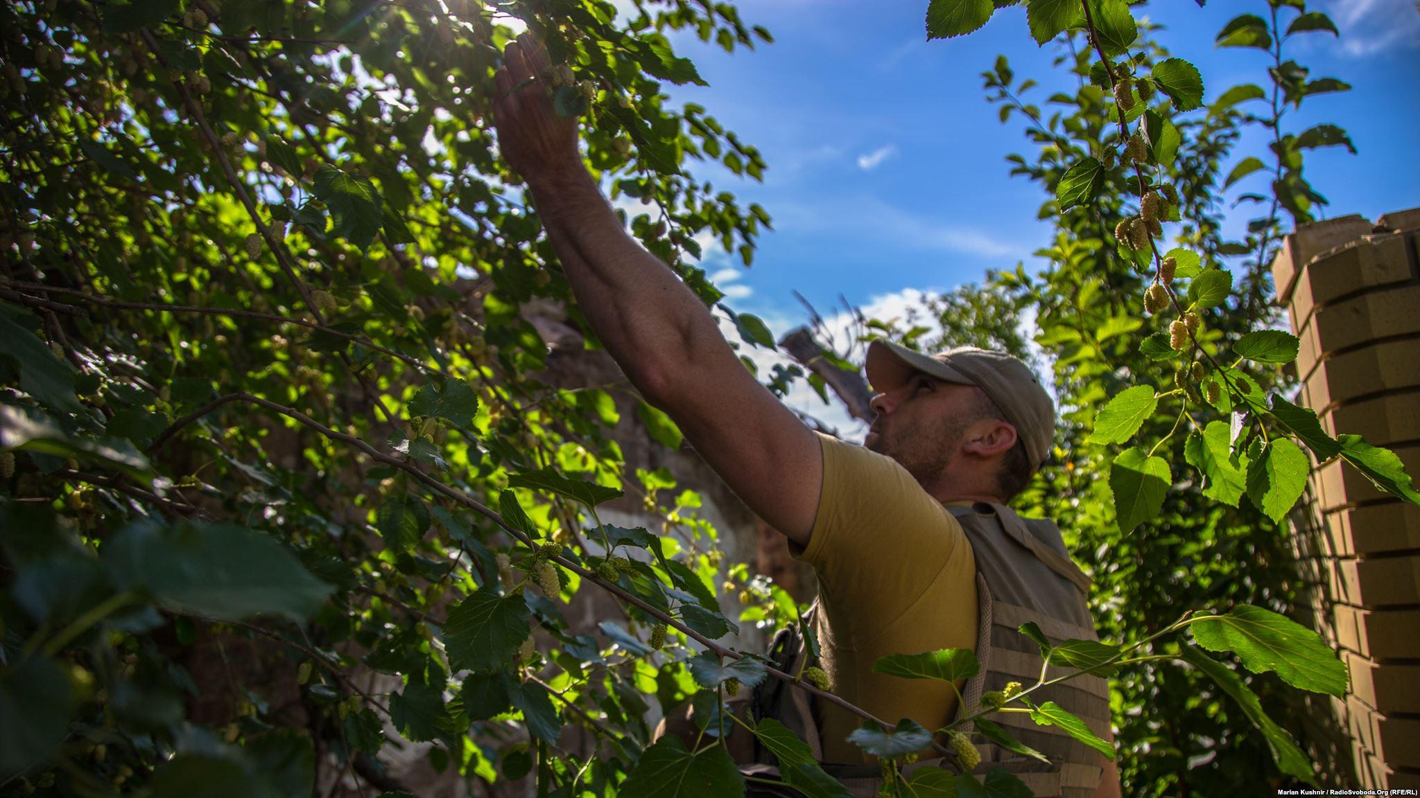 На зворотному шляху маленькі радощі життя – їмо білу шовковицю, яка росте біля дороги. Літо. 14 червня починається Чемпіонат світу з футболу в Росії. Багатьох військових турбує, чи активізуються бойові дії після нього…